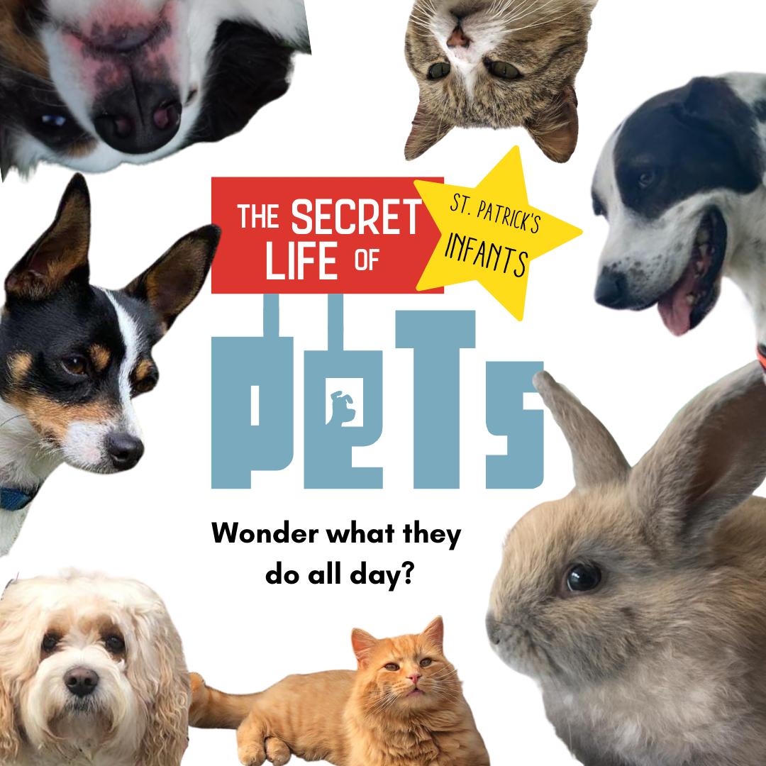 The Secret Life of St. Patrick's Infant's Pets!